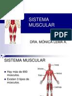 2 Sistema Muscular