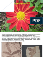 Angiospermas 1.pdf