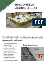Clase 2 Biologia Permeabilidad