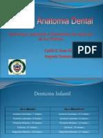 Anatomia Dental. Estructura, Anatomía y Descripción de cada uno de los Dientes.