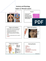 Anatomy and Physiology notes for exam 3.docx