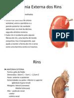 Anatomia Externa Dos Rins