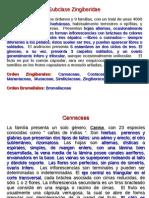 Angiospermas 3.pdf