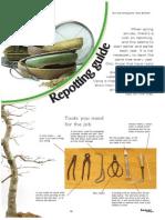 Bonsai EN Repotting Guide.pdf