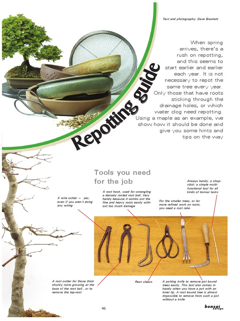 Bonsai En Repotting Guide Pdf