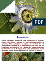 Angiospermas 9.pdf