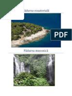 mediile si peisajele geografice.docx