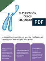 Clasificacion de Cromosomas