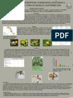 Cartel Entomologia 2012