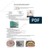 12-struktur-dan-fungsi-jaringan-tumbuhan1 (1).doc