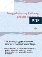 The First Energy-releasing Pathways
