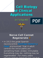 Stem Cells and Clinical Applications (2)