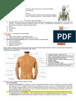 Resumo de Anatomia - Dorso (Camila, Cleiton)