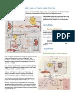 Mecanismos Compensadores de la Hipertensión Arterial