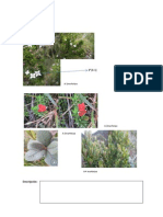 Familia Ericaceae
