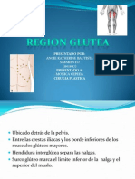 Anatomia Glutea (Expo)