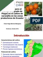 05 Ipmcrsp Ecuador Mip Naranjilla