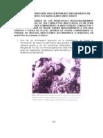 Microorganismos más frecuentemente encontrados en conductos radiculares infectados (MANUAL) (pág.