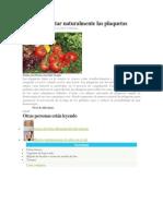 Cómo aumentar naturalmente las plaquetas