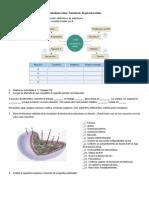 Metabolismo celular2