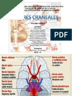 Pares Craneales y SNC - Seminario
