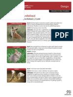 Addasiadau Anifeiliaid.pdf