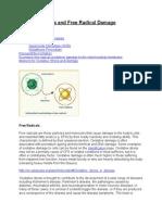 Oxidative Stress and Free Radical Damage.doc