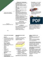 folleto histologia