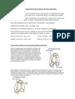 BM y cirtometría