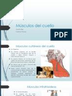 Musculos del cuello.pptx