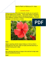 How to How to Plant a Hibiscus
