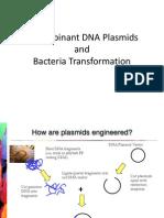 bacteria transformation lab