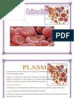 Fisiologia Plasma