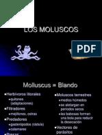 Los Moluscos 2012