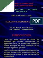 Clonación e Ingenieria Genética