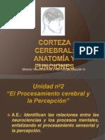 Corteza cerebral, anatom+¡a y funciones (clase 4, Unidad II)