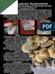 Psilocybe Mycelium Growbox Gebruiksaanwijzing