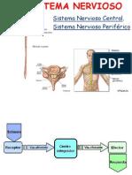 sistema nervioso mio