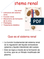 el sistema renal