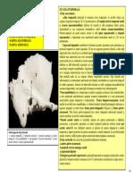 SECTIUNEA 7 NEUROCRANIUL PARTEA II.pdf