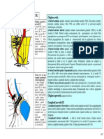 SECTIUNEA 18 NERVUL GLOSOFARINGIAN GLANDA PAROTIDA.pdf