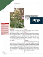Ficha Astragalus nitidiflorus