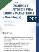 Protozoarios y Helmintos de Vida Libre y Parasitaria (2)