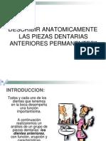 anatomía dentaria para oratoria