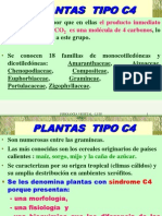 FOTOSINTESIS 4