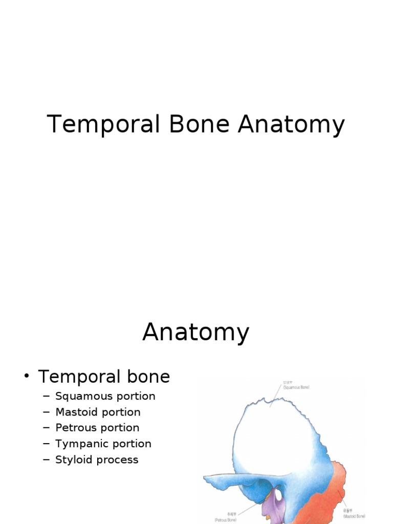 Temporal Bone Anatomy   Ear   Skeletal System