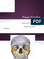 Fosasnasales.pptx