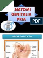 ANATOMI GENITALIA PRIA.pptx