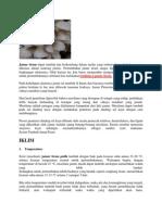 Jamur tiram dapat tumbuh dan berkembang dalam media yang terbuat dari serbuk kayu yang dikemas dalam kantong plastic.docx