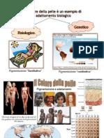 colore_della_pelle.pdf